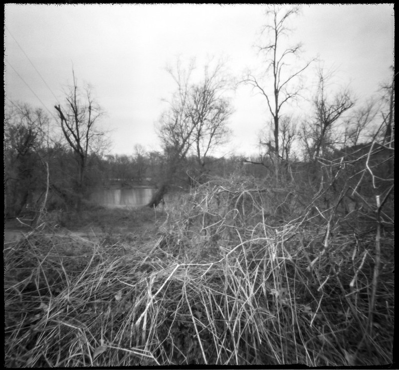 tangled reeds and vines, trees, riverside, French Broad River Park, Asheville, NC, 6x6 pinhole, Ilford FP4+, HC-110 developer, 3.4.20