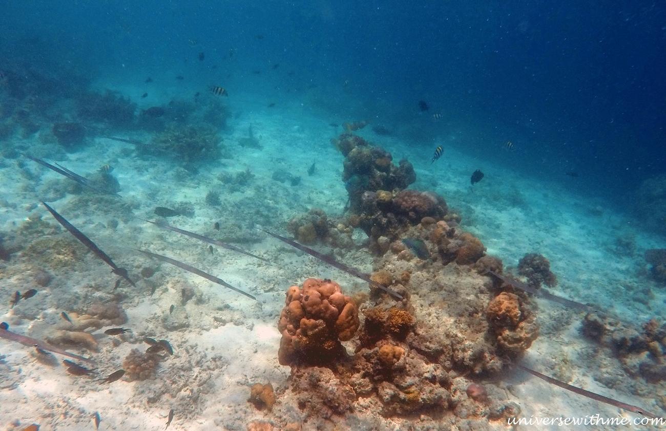 Malaysia Scubadiving_041