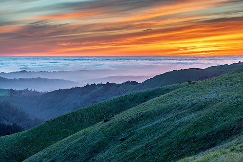california midpeninsularegionalopenspacedistrict russianridge russianridgeopenspacepreserve santacruzmountains usa unitedstates fog grass grassland landscape marinelayer plant sky sunset