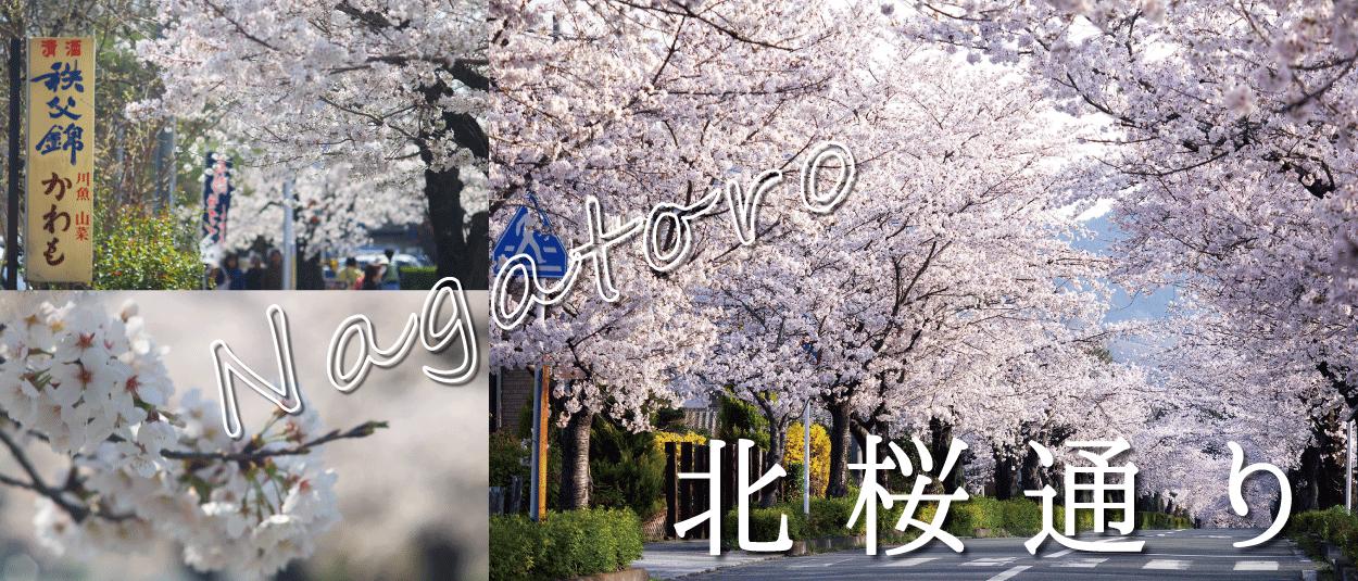 長瀞町☆北桜通り
