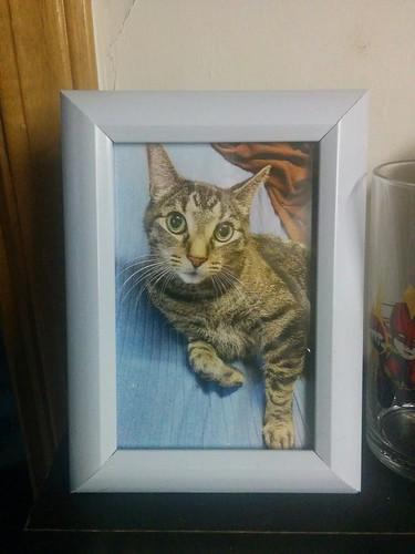 Shakespeare, framed, from Jim #toronto #shakespeare #cats #catsofinstagram #inmemoriam #photo #frame #framedphoto