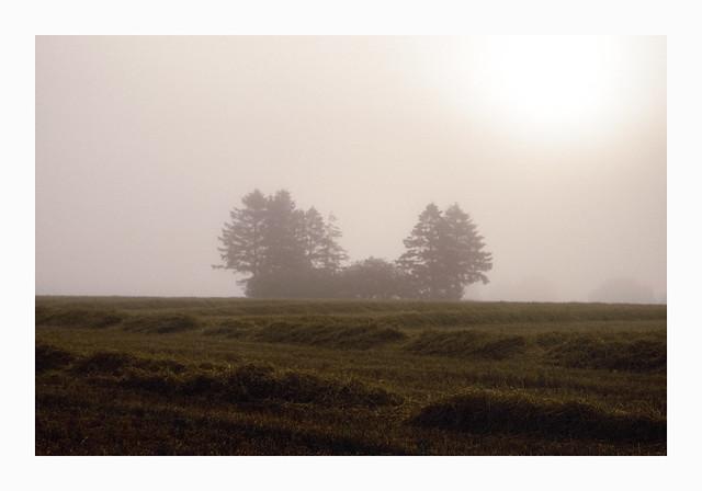 The Grove - Fuji Sensia 100