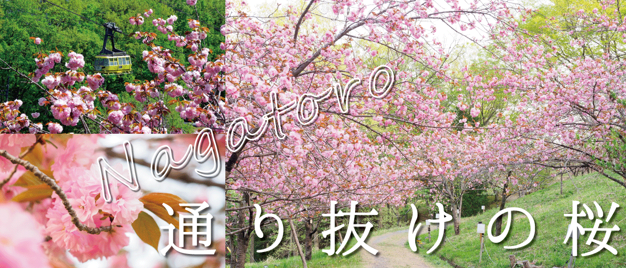 長瀞町☆通り抜けの桜