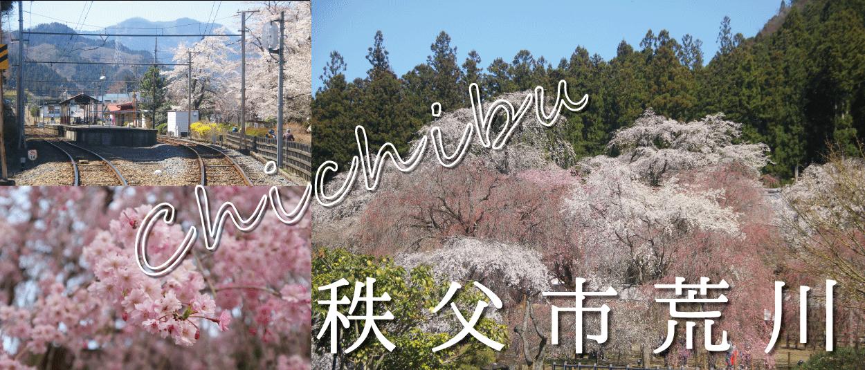 秩父市荒川☆しだれ桜