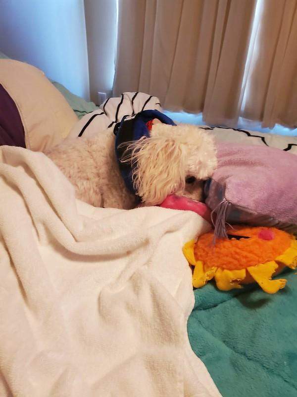 Romeo sleeping it off