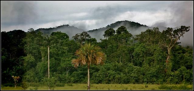 MEXICO, Auf dem Weg nach Palenque, Dschungel links und rechts der Straße ,  10583/12446