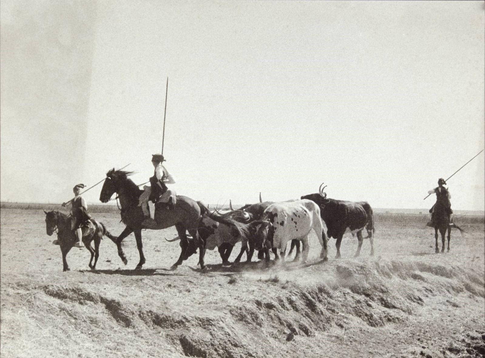 Campinos na Lezíria (H. C. de Barros, 1950-60)