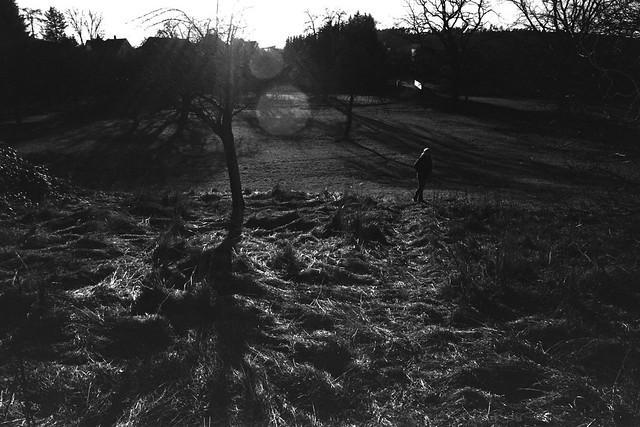 Grass field (Leica M6)