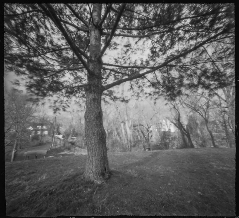 from under a tree, West Asheville Park, Asheville, NC, 6x6 pinhole, Ilford FP4+, Moersch Eco film developer, 3.4.20