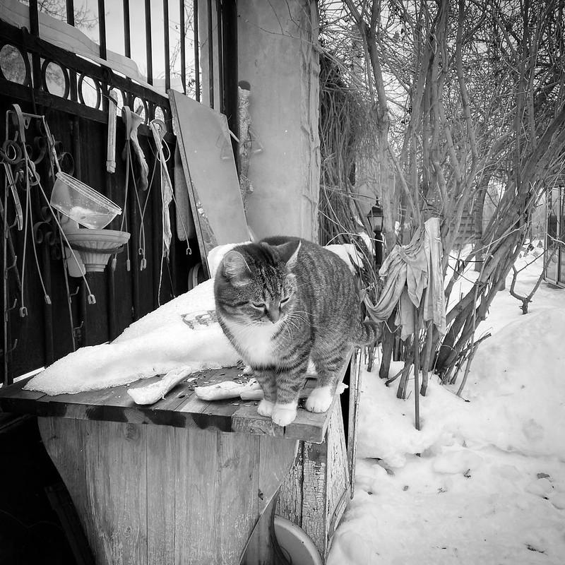 Огород зимой