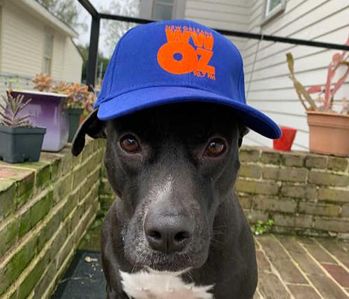 Taj the dog in the WWOZ Cap - spring 2020. Photo by Melanie Merz.