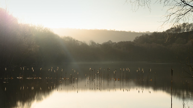 Gormire lake reeds