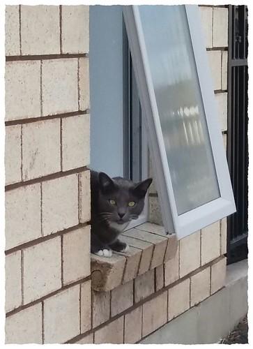 ODC - Cat