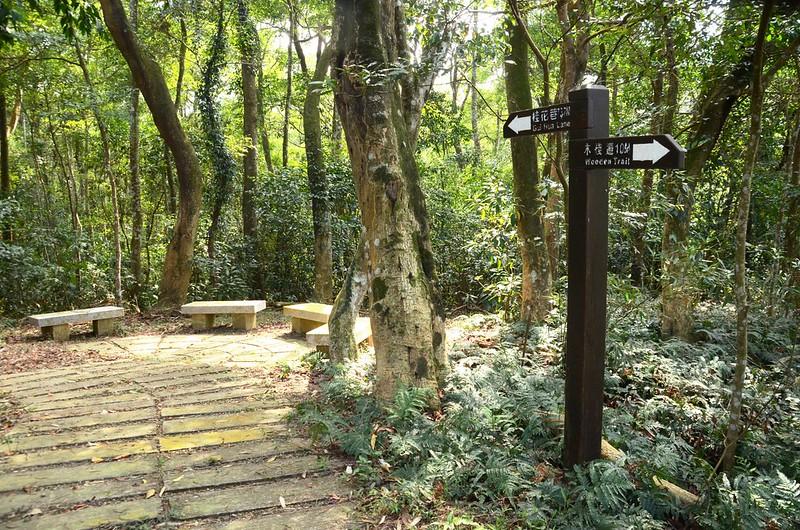 茶園坪步道稜頂