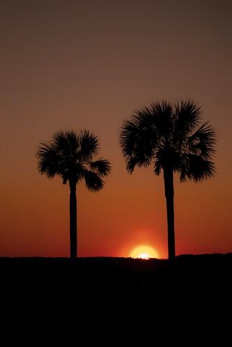 sunset silhouette tree palm orange