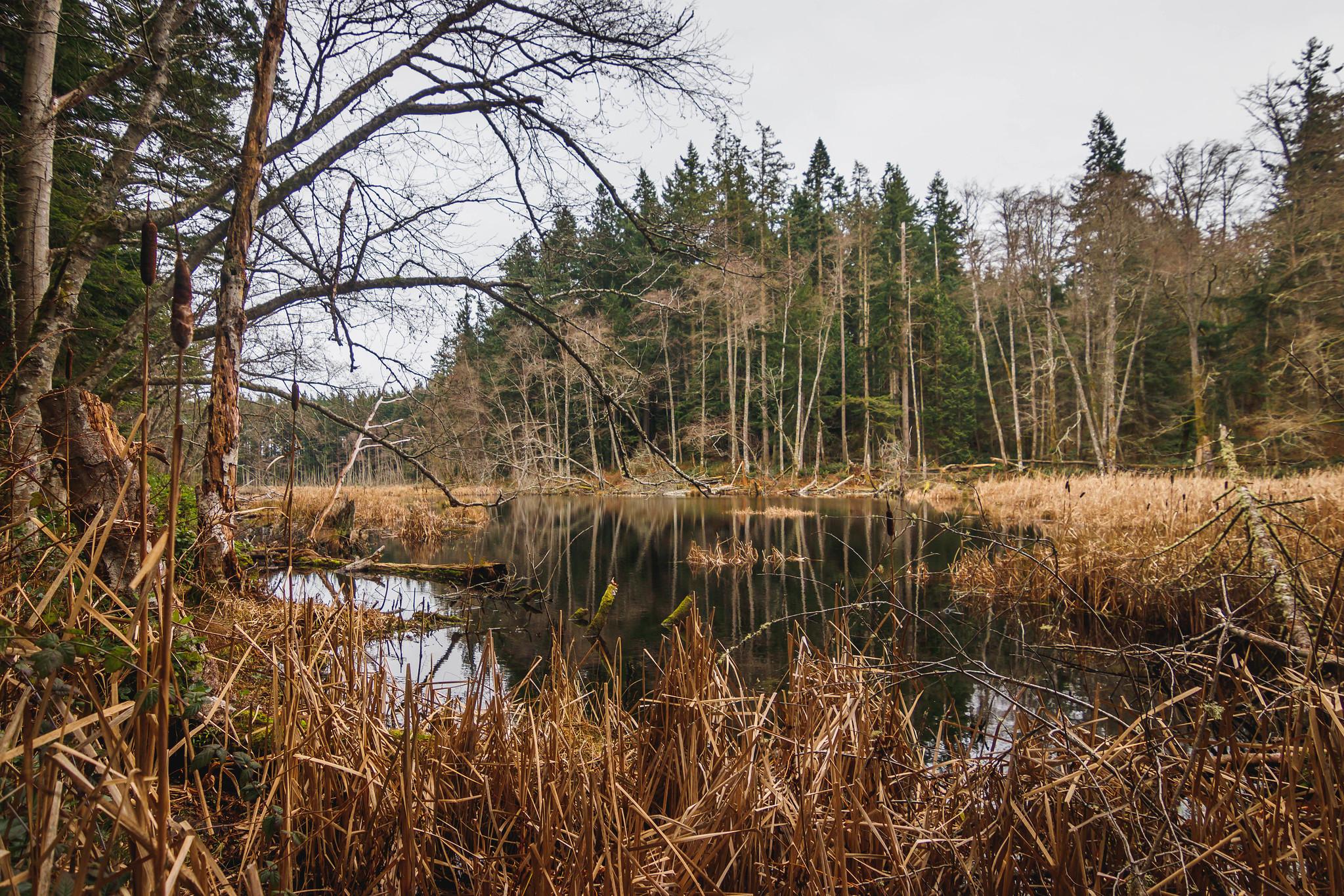Wetland before Cranberry Lake