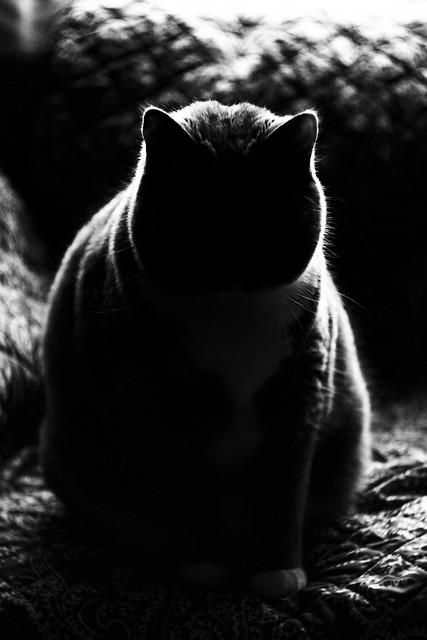 Cat 20 06 19