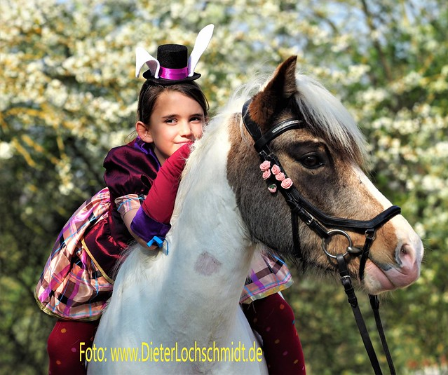 Horse Shooting near Worms in Germany - 2019