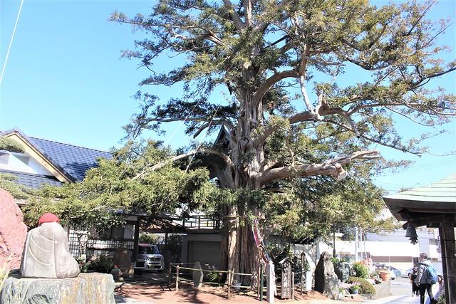 higashiizu-gojoin015