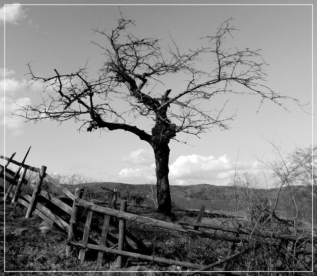 Drzewo B&W.