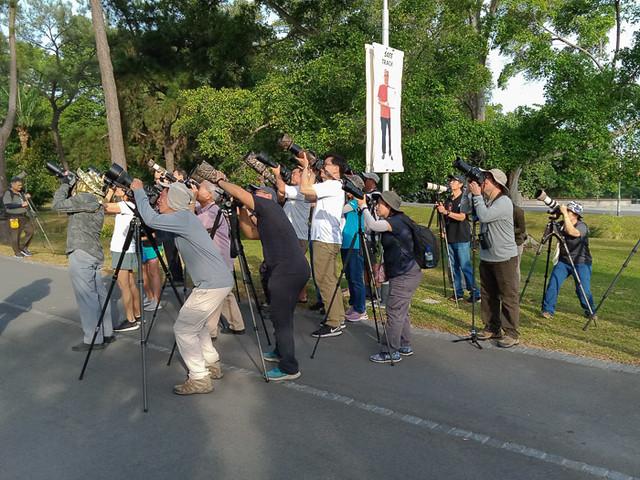 Singapore bird photographers