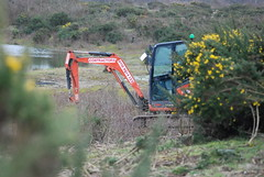 Wetland Scrapes at Greenham and Crookham Common (c) A R Wallington 2020