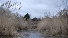 Reed Cutting at Hosehill Lake (c) A R Wallington 2020