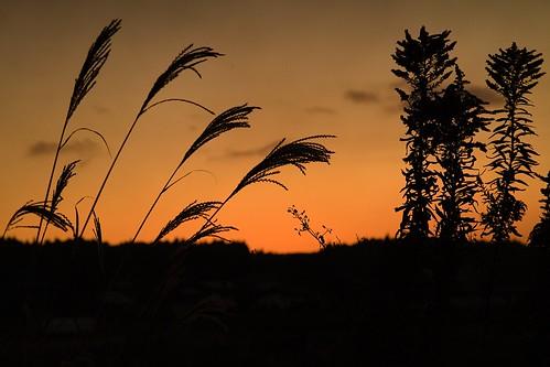 sunset sonnenuntergang silhouette orange canoneos7d ef24105mmf4lisusm nightshot nachtaufnahme farben colors