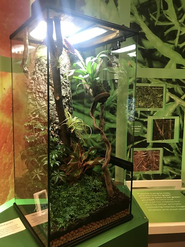 The American Museum of Natural History Hosts Playful Interactive Exhibit with the Nature of Color