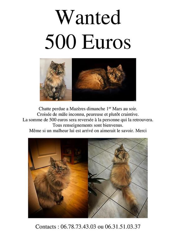 Wanted 49626652756_42b69de11f_c