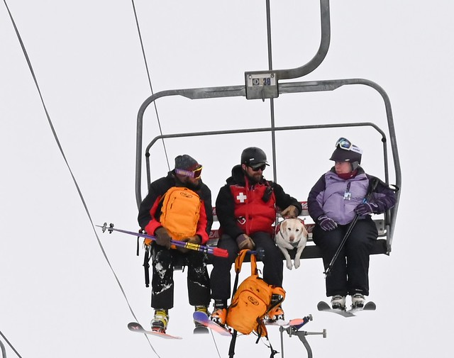 Riding the lift with an avy dog