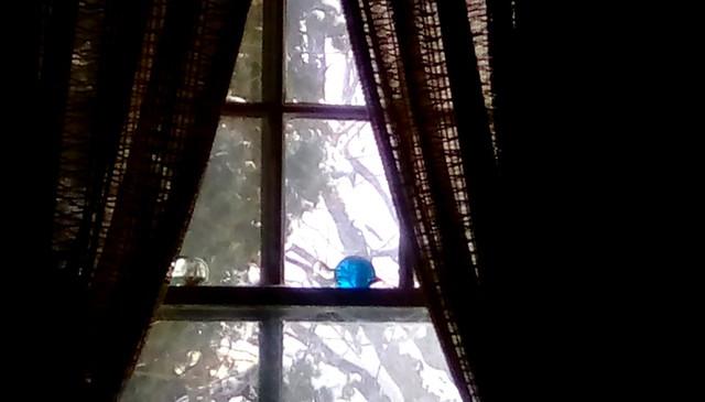 Winter through the window! - HWW Menominee Michigan
