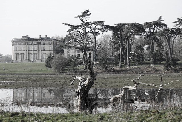 My favourite Ex-tree