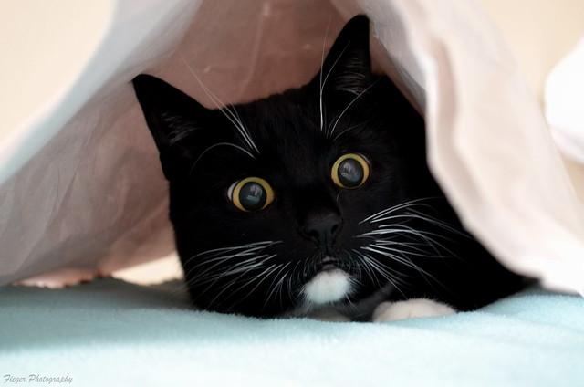 The sound of scrunchy paper ballssssss! :-o
