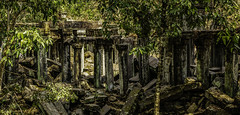 6301a   Jungle Reclamation - The Power of Nature