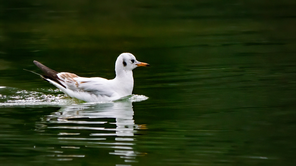 Naviguant sur l'eau verte... 49627485448_3339ee4b8f_b