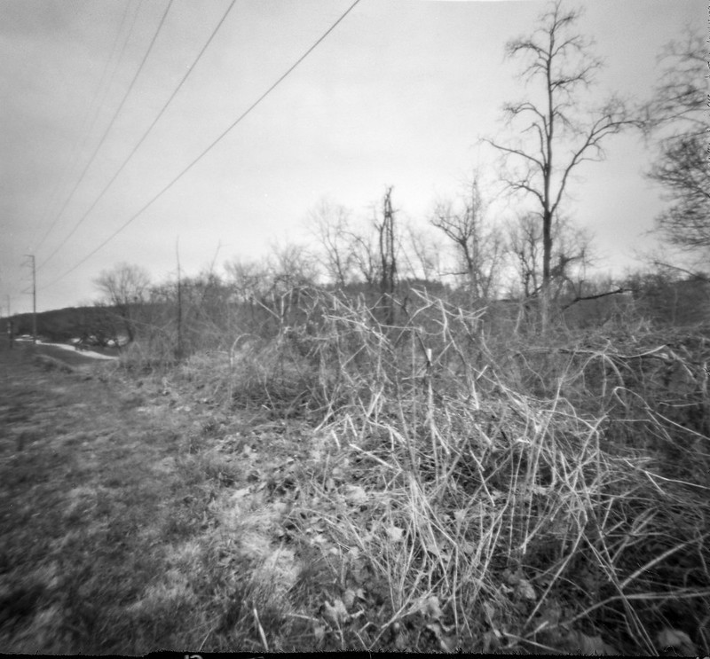 dried underbrush, tall tree, power lines, Carrier Park, Asheville, NC, 6x6 pinhole, Ilford FP4+, HC-110 developer, 3.4.20