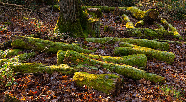 200101_Heilenbecker Talsp.(10) - Grünes Holz / Green wood