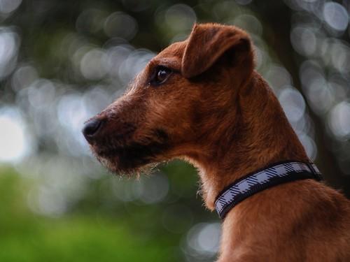 My Puppy dog, Bandit.