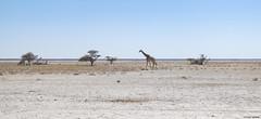 Namibia  - Etosha Park