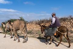 Dans la campagne autour d'Essaouira