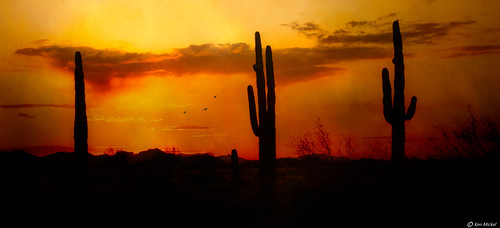 arizona cacti cactus desert estrellla fineart goodyeararizona kenmickelphotography landscape outdoors plants saguaro sky sunsets texture textured textures backlighting nature photography silhouette silhouettes sunset goodyear unitedstatesofamerica