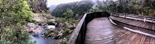 boardwalk elands bulgaplateau nsw australia midnorthcoast manningvalley panorama landscape ellenboroughfalls ellenboroughriver