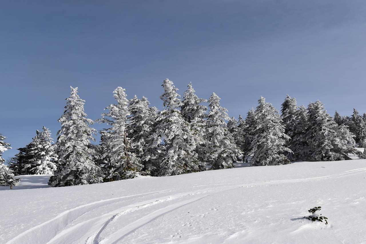 四阿山の樹氷