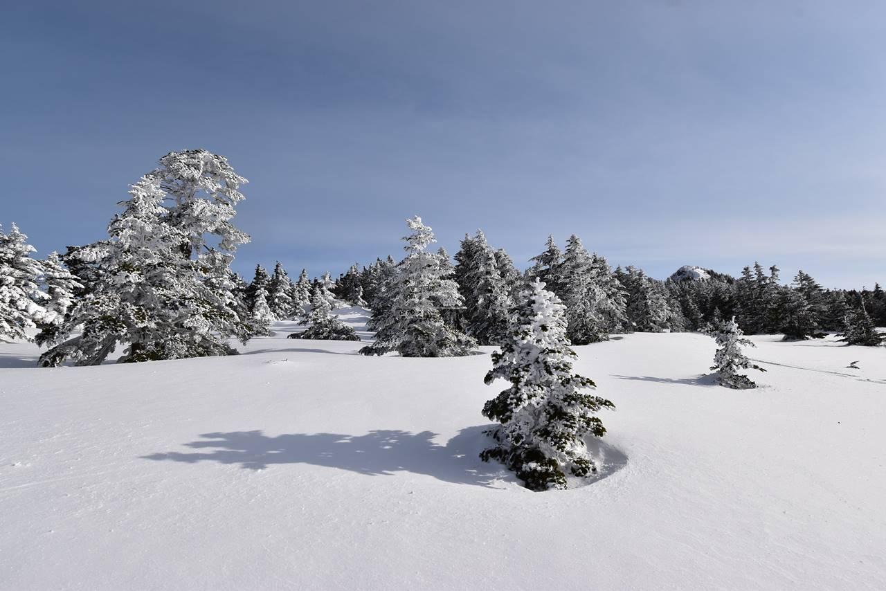 四阿山の樹氷・霧氷風景