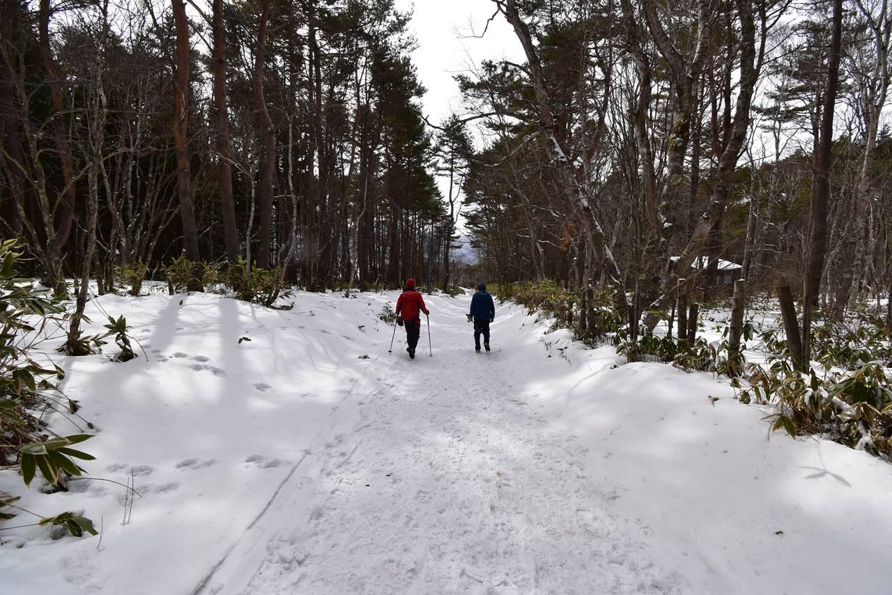 四阿山 序盤の林道
