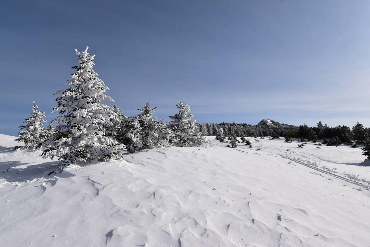 冬の四阿山 樹氷と雪原