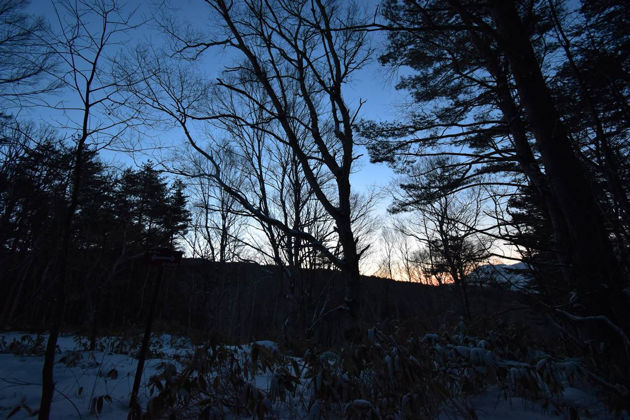 夜明けの空と森