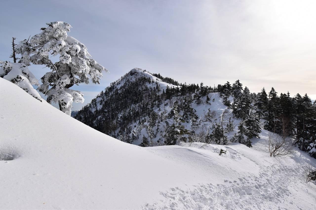 【上信越】冬の四阿山 樹氷と雪原とアルプスの展望 雪山登山