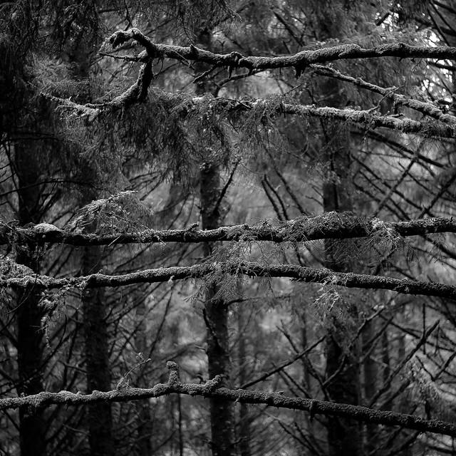 Tree Moss 011